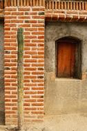 todos santos cactus